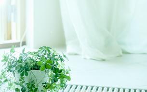 窓辺に置かれた観葉植物の写真素材 [FYI04784864]