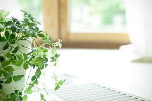 窓辺に置かれた観葉植物の写真素材 [FYI04784867]