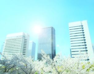 高層ビル群と桜の写真素材 [FYI04784965]
