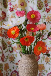 花瓶に活けられたミックスカラーのポピーの写真素材 [FYI04785161]