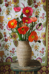 素朴な花瓶に活けられたポピーの写真素材 [FYI04785162]
