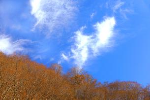 岐阜県 揖斐川町 青空に白い雲が印象に残る晩秋の山の写真素材 [FYI04785198]