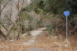 鬱蒼とした木々に囲まれた廃道477号の国道標識の写真素材 [FYI04785248]