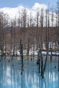 雪が残る春の青い池と冠雪の十勝岳 美瑛町の写真素材 [FYI04785374]
