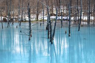残雪が残る春の青い池 美瑛町の写真素材 [FYI04785375]