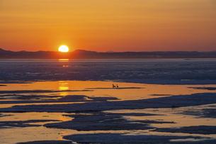 氷が浮かぶ春の湖の夕暮れ サロマ湖の写真素材 [FYI04785396]