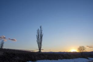 美しい春の夕暮れとポプラの写真素材 [FYI04785398]