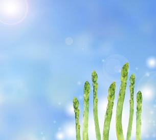 アスパラガスの水彩イラスト 青背景のイラスト素材 [FYI04785403]