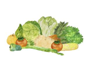 手描き水彩の野菜セットのイラスト素材 [FYI04785407]