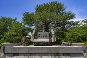 国宝彦根城金亀児童公園 記念樹花の生涯の写真素材 [FYI04785642]