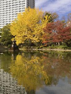 東京都 日比谷公園の黄葉の写真素材 [FYI04785712]