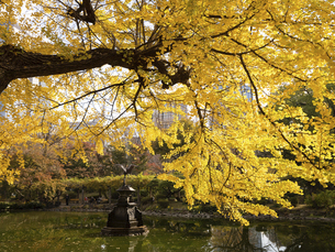 東京都 日比谷公園の黄葉の写真素材 [FYI04785717]