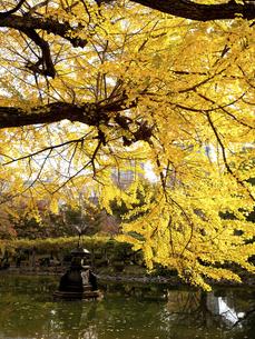 東京都 日比谷公園の黄葉の写真素材 [FYI04785718]