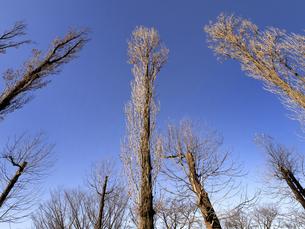 落葉した樹木の写真素材 [FYI04785767]