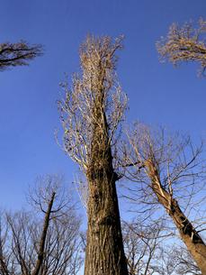 落葉した樹木の写真素材 [FYI04785768]