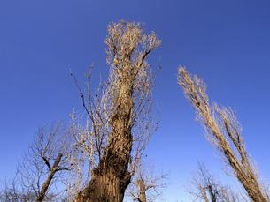落葉した樹木の写真素材 [FYI04785769]