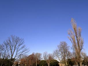 落葉した樹木の写真素材 [FYI04785770]