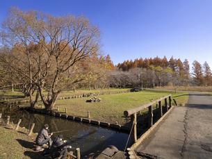 晩秋の水元公園 東京都の写真素材 [FYI04785771]