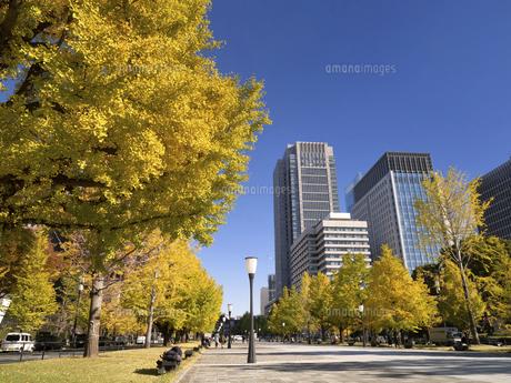 東京都 丸の内オフィスビル街とイチョウ並木 の写真素材 [FYI04785897]
