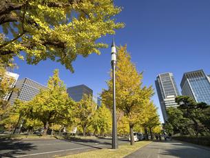 東京都 丸の内オフィスビル街とイチョウ並木 の写真素材 [FYI04785898]