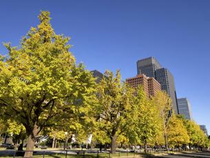 東京都 丸の内オフィスビル街とイチョウ並木 の写真素材 [FYI04785899]
