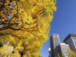 東京都 丸の内オフィスビル街とイチョウ並木 の写真素材 [FYI04785900]