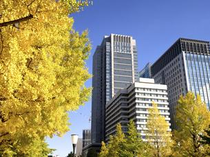 東京都 丸の内オフィスビル街とイチョウ並木 の写真素材 [FYI04785901]