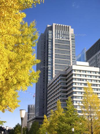 東京都 丸の内オフィスビル街とイチョウ並木 の写真素材 [FYI04785902]