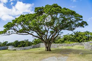 古宇利殿内脇に立つ大木の写真素材 [FYI04786245]