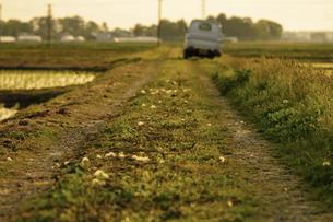 あぜ道と軽トラックの写真素材 [FYI04786600]
