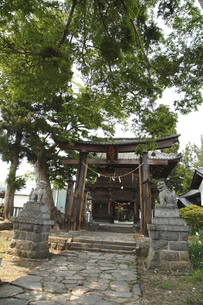 八幡神社の写真素材 [FYI04786790]