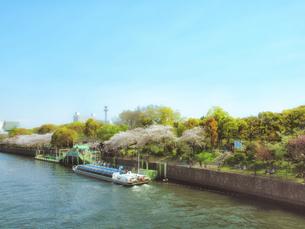 遊覧船と桜の写真素材 [FYI04786953]