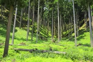 下草の多い森林の写真素材 [FYI04786984]