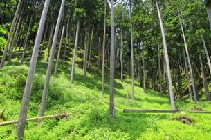下草の多い森林の写真素材 [FYI04786986]