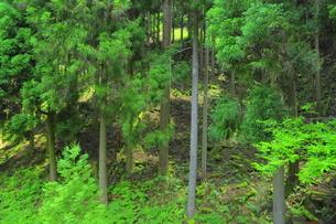 管理の行き届いてない森林の写真素材 [FYI04786990]