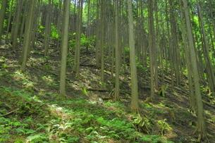 管理の行き届いてない森林の写真素材 [FYI04786993]