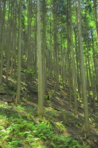 管理の行き届いてない森林の写真素材 [FYI04786994]
