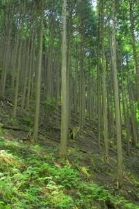 管理の行き届いてない森林の写真素材 [FYI04786995]