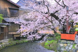 春の祇園の巽橋と白川の写真素材 [FYI04786996]