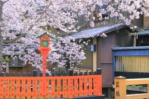 春の祇園の巽橋と白川の写真素材 [FYI04786997]