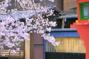 春の祇園の巽橋と白川の写真素材 [FYI04786998]