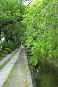 新緑の哲学の道の写真素材 [FYI04787002]