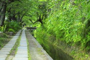 新緑の哲学の道の写真素材 [FYI04787003]