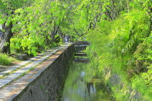 新緑の哲学の道の写真素材 [FYI04787025]