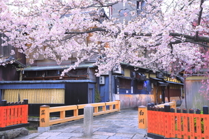 春の祇園の巽橋と白川の写真素材 [FYI04787026]