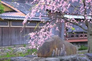 祗園の白川南通の吉井勇の歌碑の写真素材 [FYI04787029]