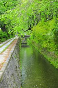 新緑の哲学の道の写真素材 [FYI04787034]