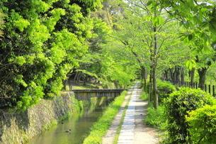 新緑の哲学の道の写真素材 [FYI04787035]
