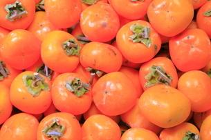 干し柿用の柿 の写真素材 [FYI04787036]