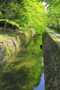 新緑の哲学の道の写真素材 [FYI04787037]